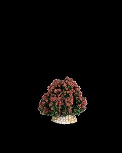 Buisson rouge - Décor
