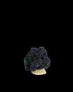 Buisson lavande - Décor