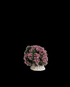 Buisson rose - Décor