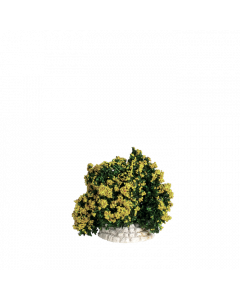 Buisson jaune - Décor