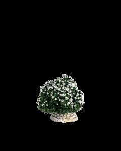 Buisson blanc - Décor